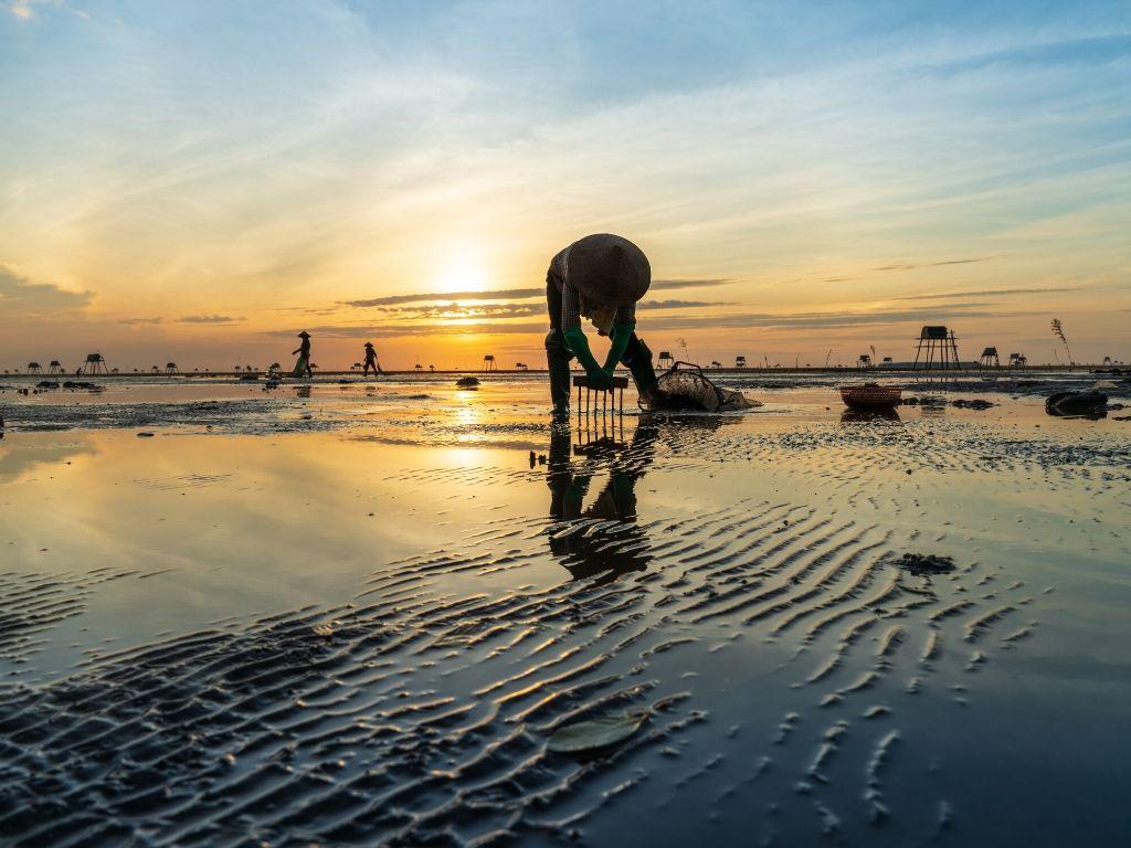 Pescador em Thai Binh Vietname